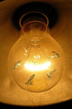 Light birds
